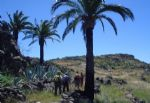 Walking holidays in Spain - Canary Islands -   La Gomera